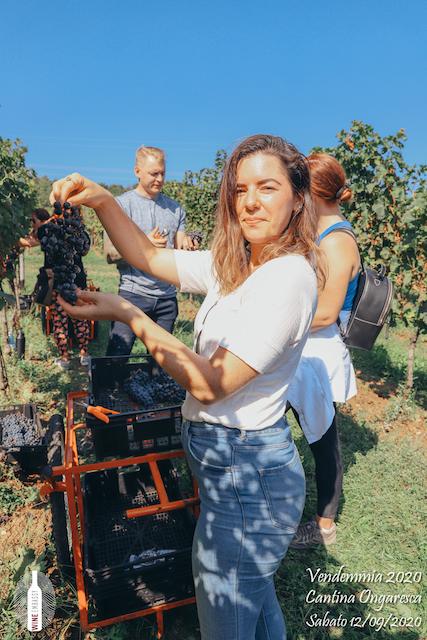 foto Evento Wine Embassy – Vendemmia @ Cantina Ongaresca 12 Settembre 2020 – – 37