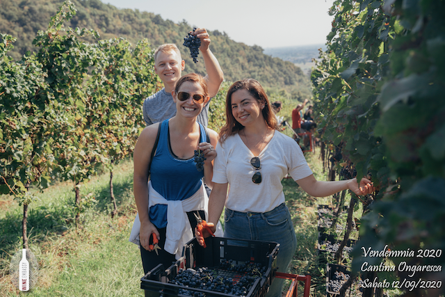 foto Evento Wine Embassy – Vendemmia @ Cantina Ongaresca 12 Settembre 2020 – – 39