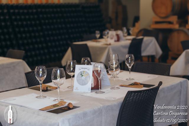 foto Evento Wine Embassy – Vendemmia @ Cantina Ongaresca 12 Settembre 2020 – – 54