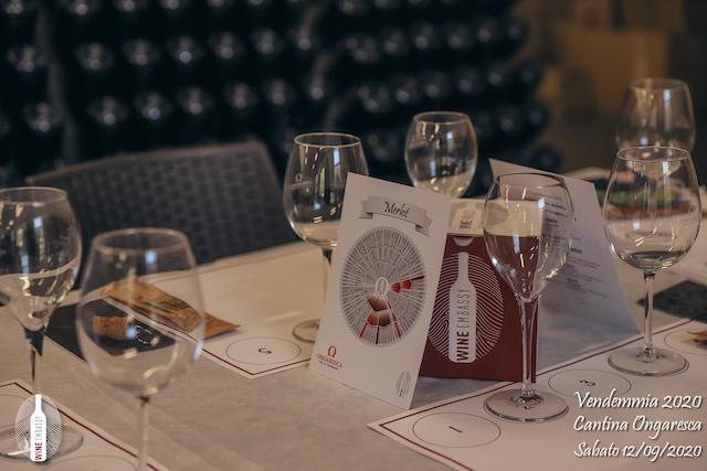 foto Evento Wine Embassy – Vendemmia @ Cantina Ongaresca 12 Settembre 2020 – – 56