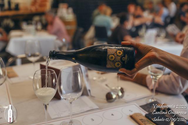 foto Evento Wine Embassy – Vendemmia @ Cantina Ongaresca 12 Settembre 2020 – – 59