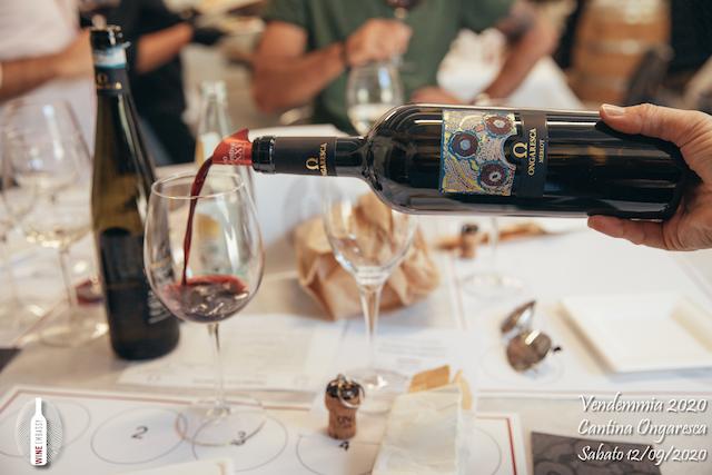 foto Evento Wine Embassy – Vendemmia @ Cantina Ongaresca 12 Settembre 2020 – – 70