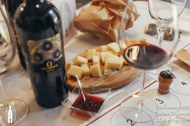 foto Evento Wine Embassy – Vendemmia @ Cantina Ongaresca 12 Settembre 2020 – – 71