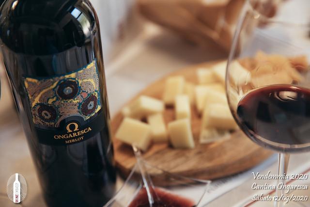 foto Evento Wine Embassy – Vendemmia @ Cantina Ongaresca 12 Settembre 2020 – – 72